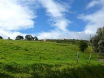 Kosta Rika'da bir inek çiftliği