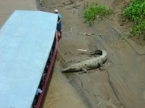 Kosta Rika'nın Tárcoles Nehri'nde bir tekne ve timsah