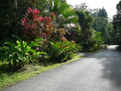 Kostarika'nın Karayip tarafında sahil yolu