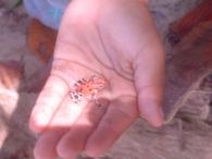 Panama'da bir kurbağa
