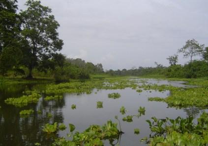 Panama'nın Changinola kasabasından Bocas del Toro bölgesine giderken yol